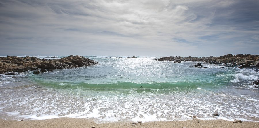 Coastal Images Lean Pickings