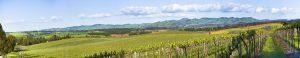 colourful Barossa Hills