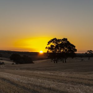 glorious sunset over Lyndoch in the Barossa Valley
