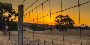 golden sunset and the fence