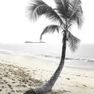 Printing this Lone Palm Tree on Beach