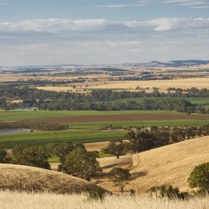 Viewing Barossa Valley from Steingarten Rd.