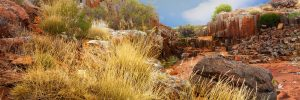 tall yellow Spinifex Grass and Rocky Outcrop