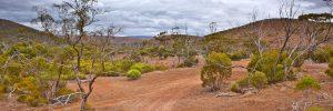 wheel tracks outback Gawler Ranges