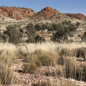 Distant Range in the Rudall NP.