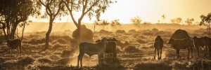 Outback Australia Dust on Sunset