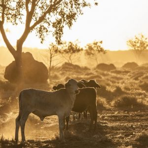 Outback Australia Dust on Sunset