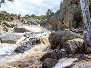 Flood waters Mannum Falls